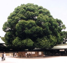http://www.teckyo.com/images/stories/Tokyo-Prayer_Tree.jpg
